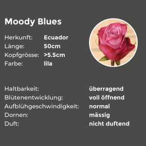 Edelrosen Moddy Blues